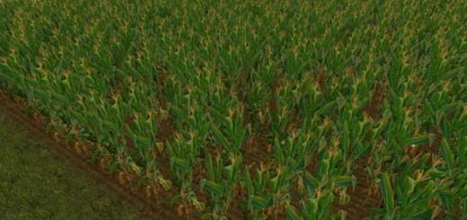 NEW Maize Texture